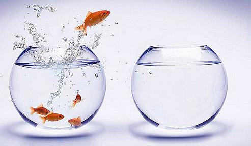 Смела златна рибка